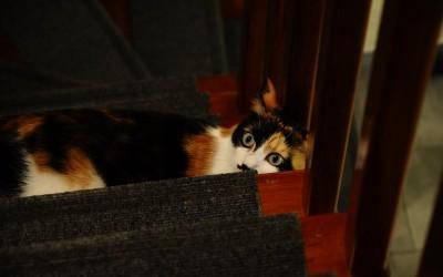 Storie feline: quando anche i gatti si annoiano