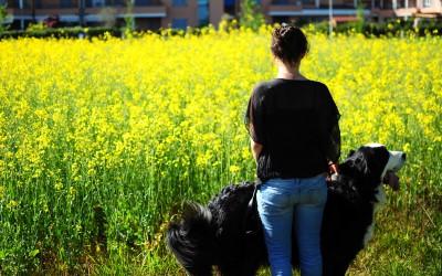 Il cane e la città